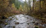 RFP – Graves Creek Large Woody Debris Project