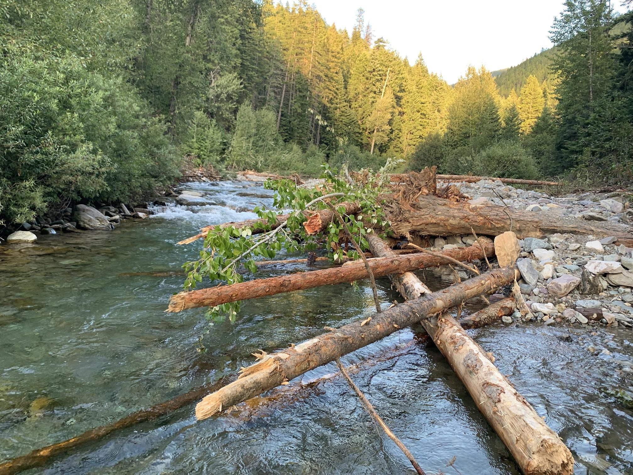 Floodplain Restoration Well Underway in Vermilion River